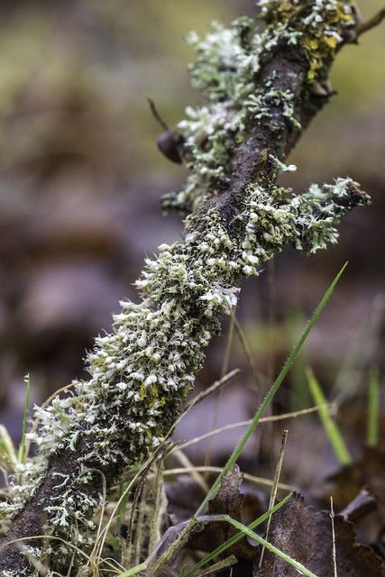 Incredible Lichens