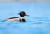 Red-breasted Merganser by Greg Gard