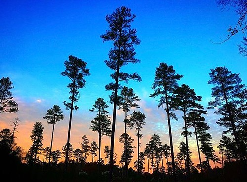 Dusk in #DukeForest.