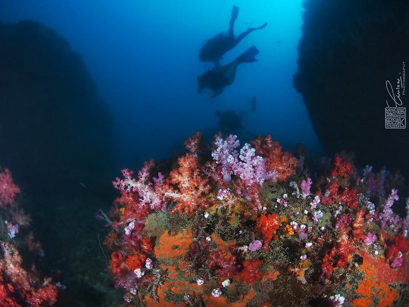 27-29 November 2017 Tioman Diving before Monsoon
