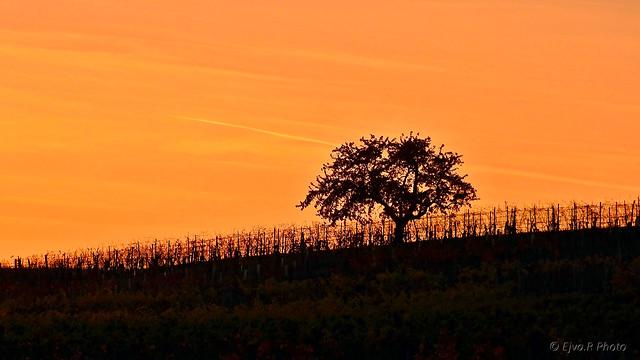 Twilight Sunset / Alkonyat