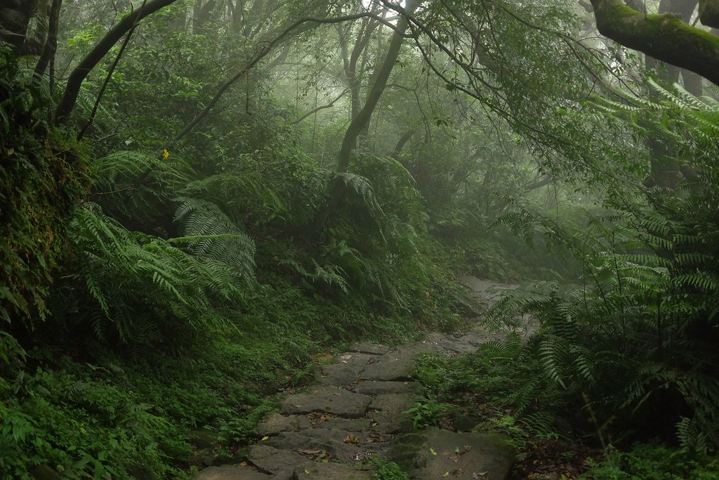 Miaopu trail to Qixingshan, Yangmingshan National Park, Taipei, Taiwan