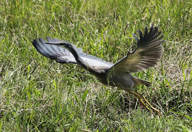 Heron Take-off