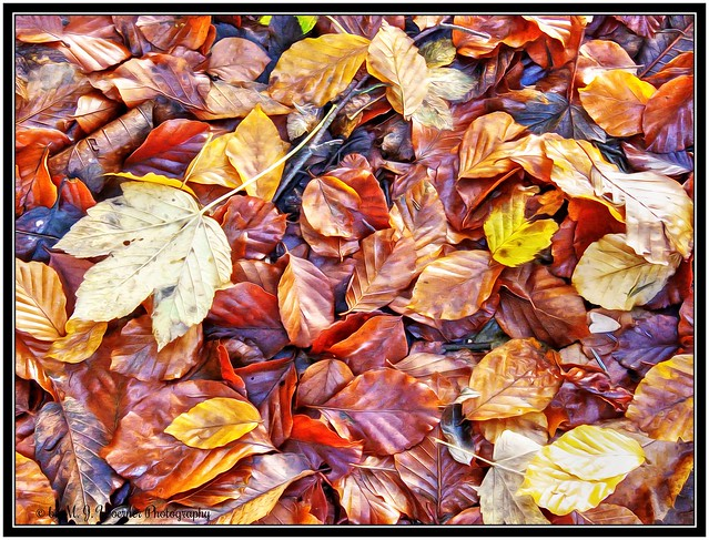 Autumn Foliage 14