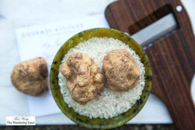 Fresh White Truffles - Tuber Magnatum Pico
