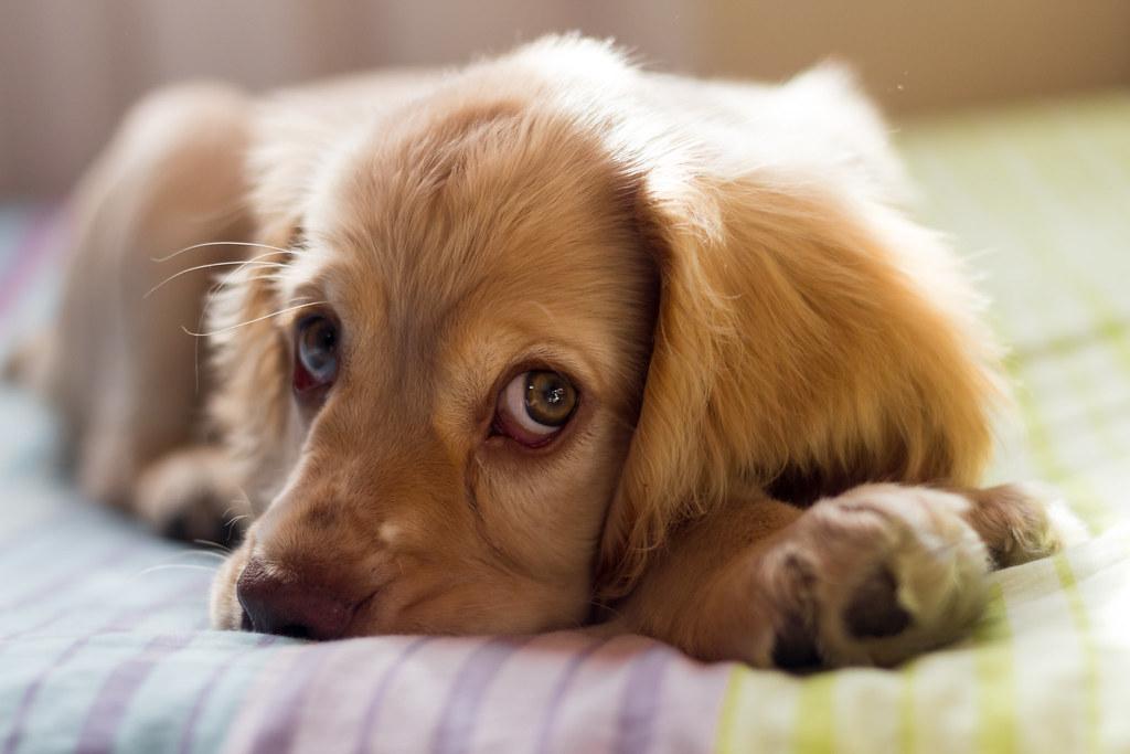 photo of pet dog