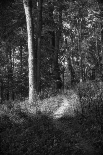 forest path 2 | by bwstock