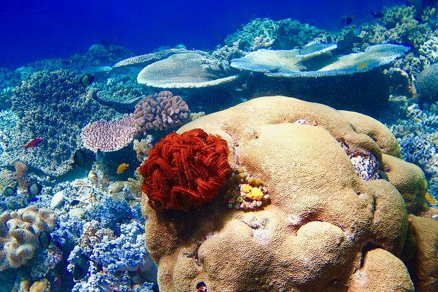 Solomon sea