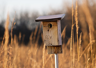 Golden Hour Birdhouse