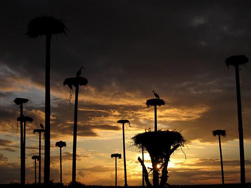 nubes nwn clouds cielo contraluz cáceres siluetas sky sunset cigüeña extremadura