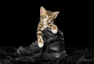 Kitten in Boot pet photography. | by jasonsulda