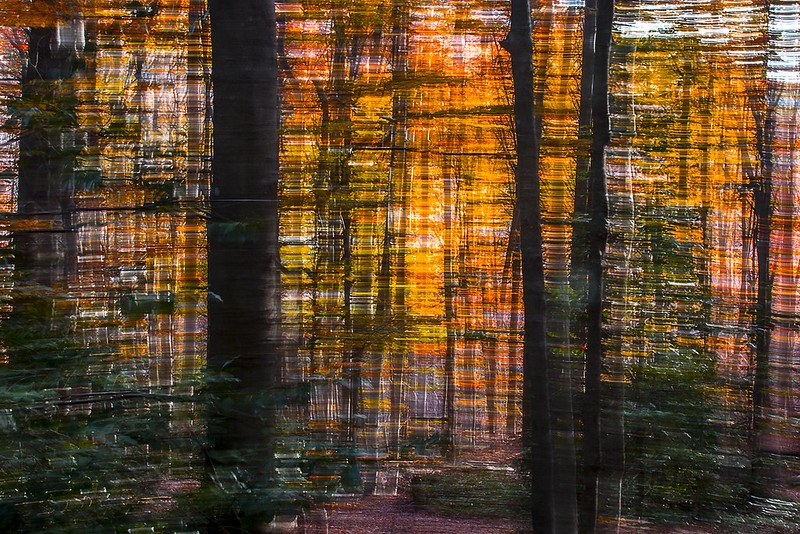 Trembling woods