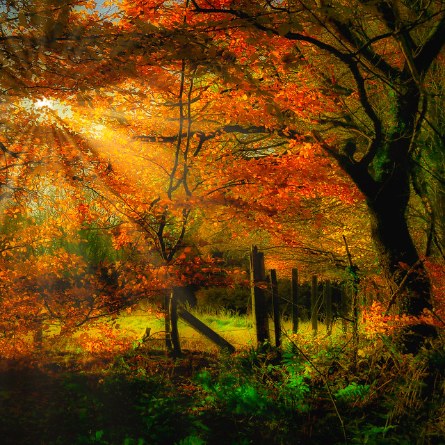 Autumnal Thornley Woods