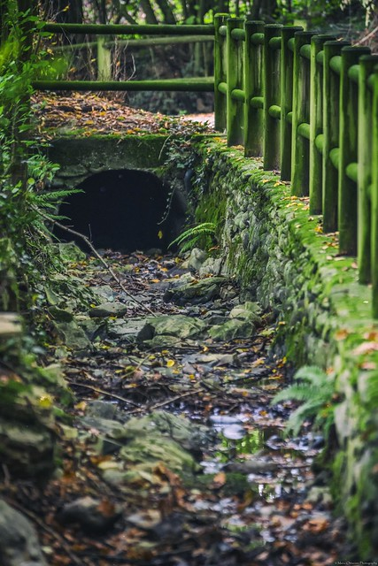 Relaxing pathway - A walk in the wood -