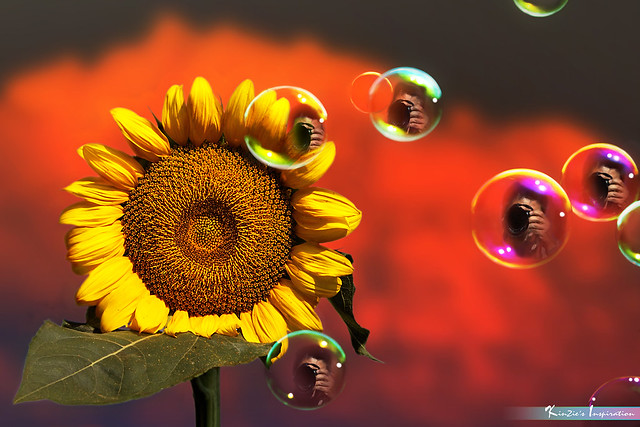 Sunflower.. Bubbles.. Me.. *Nature's Inspiration*