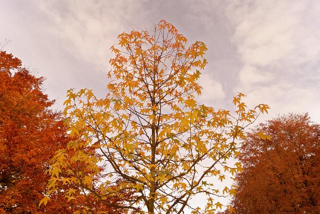 Le trio d'automne - The trio of fall