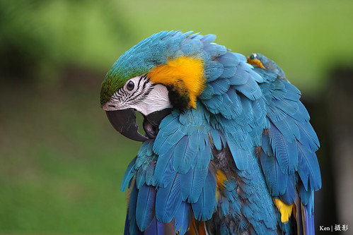 Parrot portrait | by Ken Goh thanks for 3 Million views