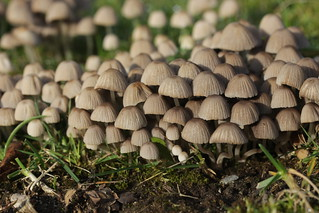 Mushrooms | by Björn S...