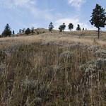 Sagebrush Meadow