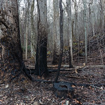 Remnants of fire, Smoky Mountains