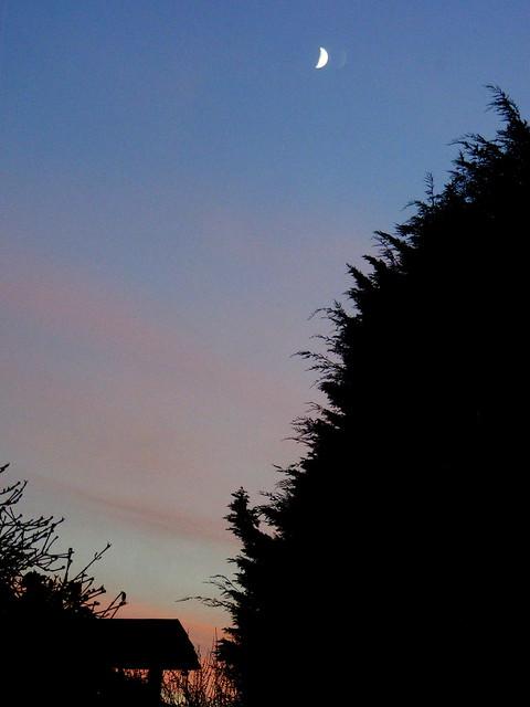 November Moon..  1