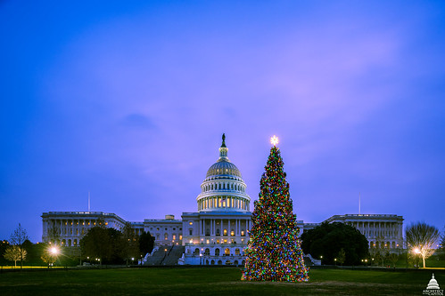2017 U.S. Capitol Christmas Tree Lit | by USCapitol