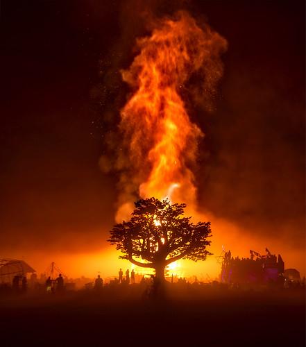 Burning Man Portfolio