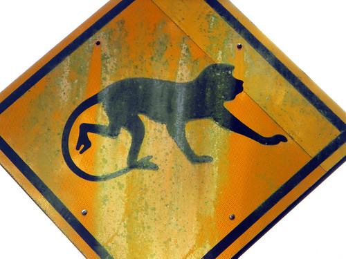 Monkey crossing at the zoo in KL in Malaysia