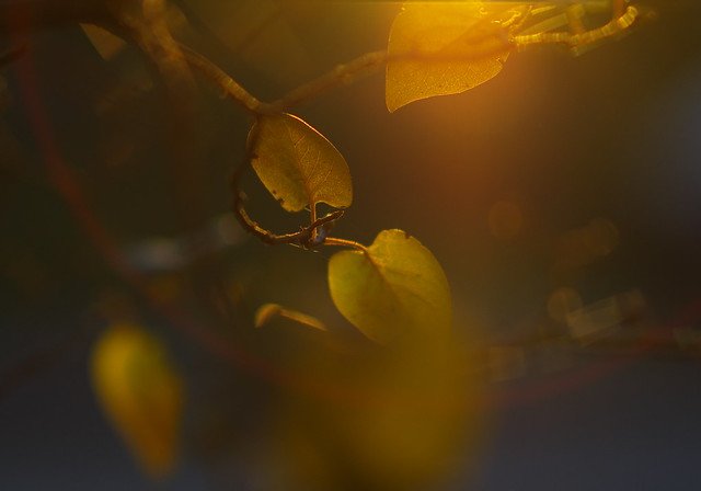 Leaves in the sun