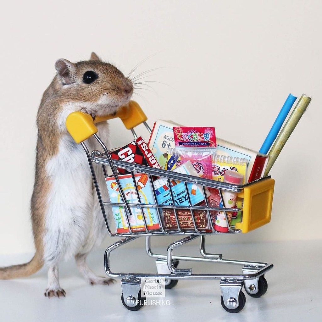Christmas shopping has BEGUN! #gerbil #dollhouse #dollshouse #rement #miniature #miniature #hamster #pocketpet #pocketpets #smallanimals #petphotography #pets #smallpet #rodent #dollshouse #rat #canadian #petsofig #pets_perfection #pets_of_our_world #pets