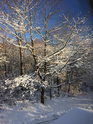winter snow firstsnow shadows trees sunrise peaksisland maine me usa 04108 cumberlandcounty donshall origamidon