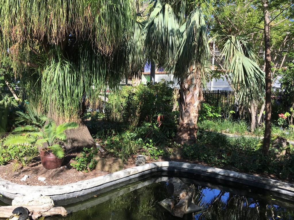 miami beach botanical garden | phillip pessar | flickr