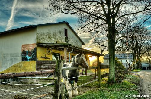 ranch horses pferde stall bäume zaun sonne sun sunrise sonnenaufgang gebäude hof morgens früh