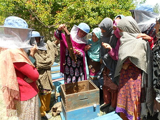 CED for Women Empowerment through Honey Bee Farming23