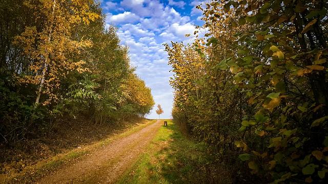 Der Weg das Ziel der Baum