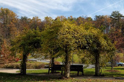 sweetarrowlakecountypark schuylkillcounty pennsylvania lake autumn fall foliage bench sky trees colorful soe inspiredbylove saveearth canon24105l canont6i tranquility peaceful canoneosrebelt6i ef24105mmf4lisusm milliecruz landscape