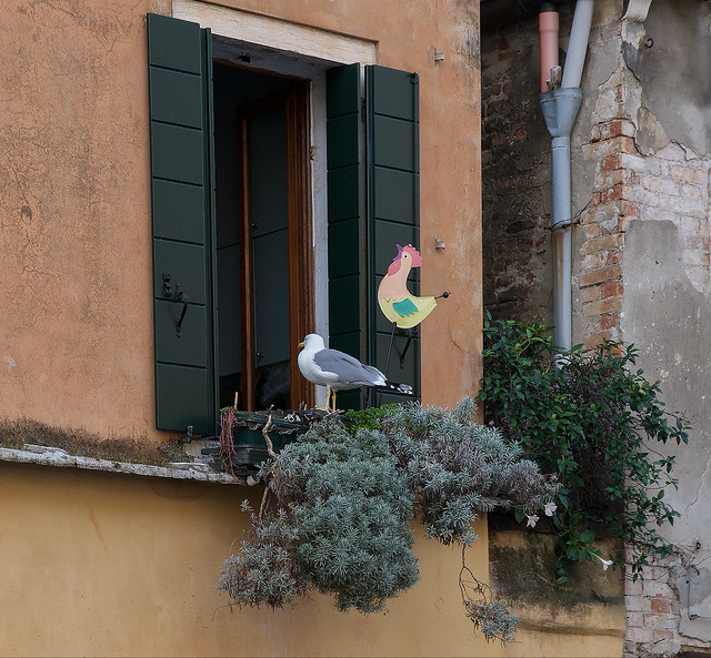 Scorci Veneziani (Signora mi date qualcosa...)