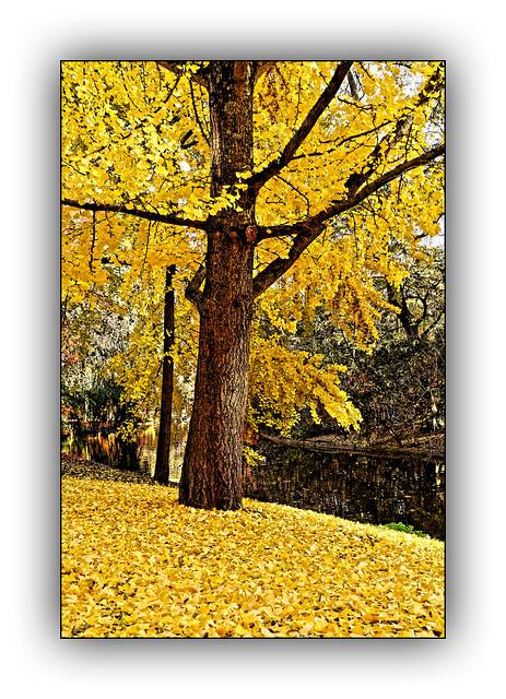 Ballade  automnale (Autumn walk) 5
