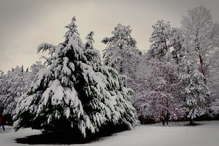 Snow Covered Trees   by ChristianRock