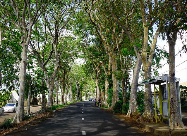 A road running through a tunnel of green trees