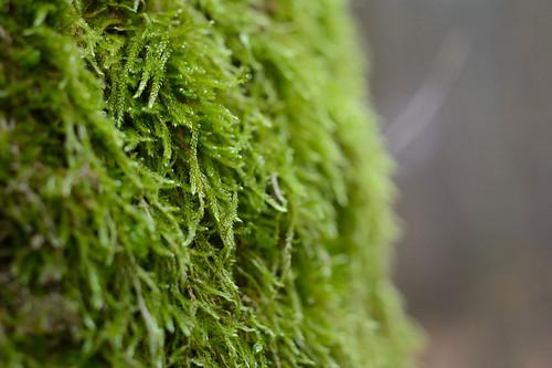 Moos auf einem Baum | by BLUESPACES PHOTOGRAPHY