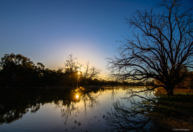 Morning Glow by the Billabong