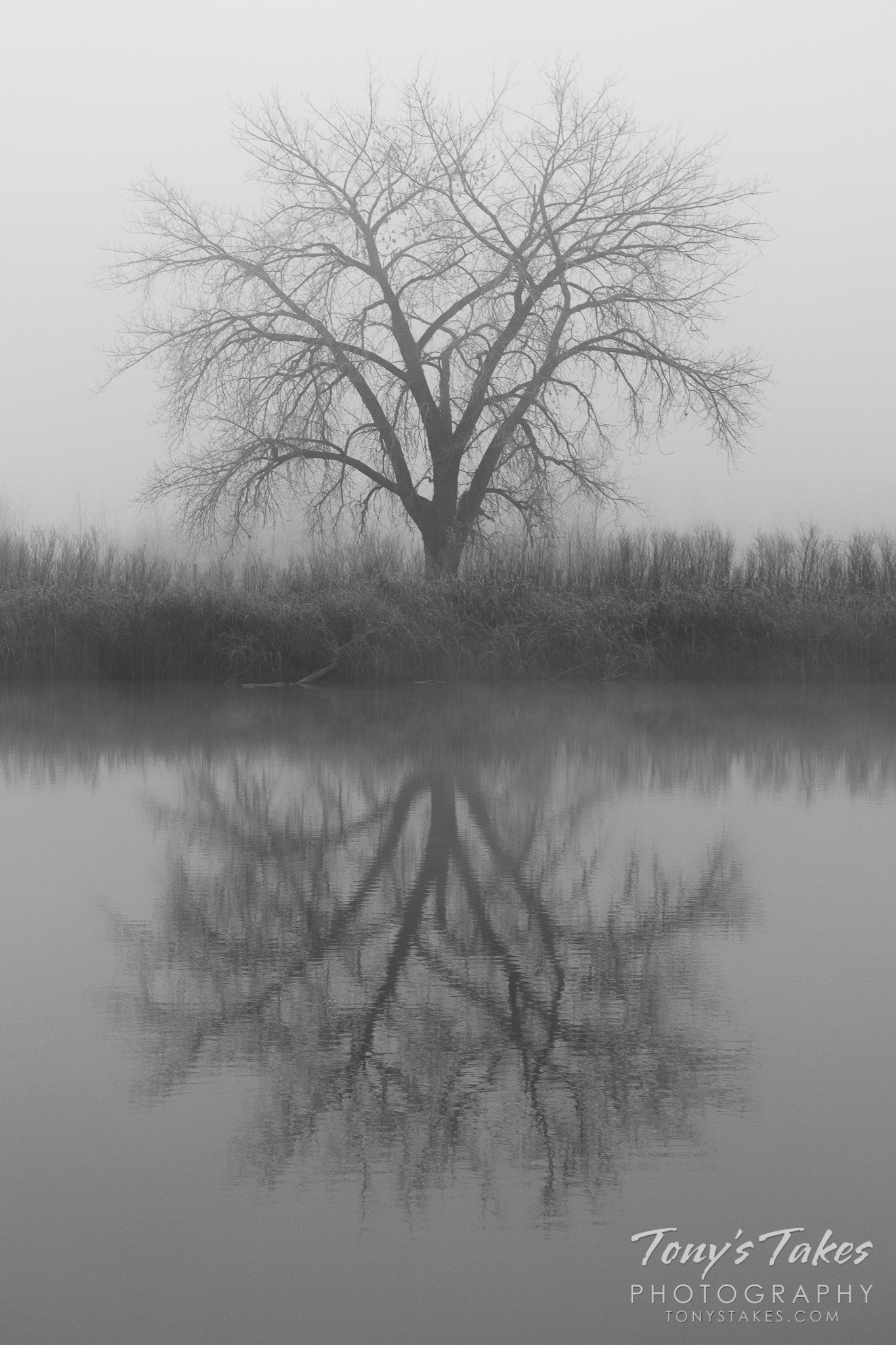 Solitary reflections in black and white