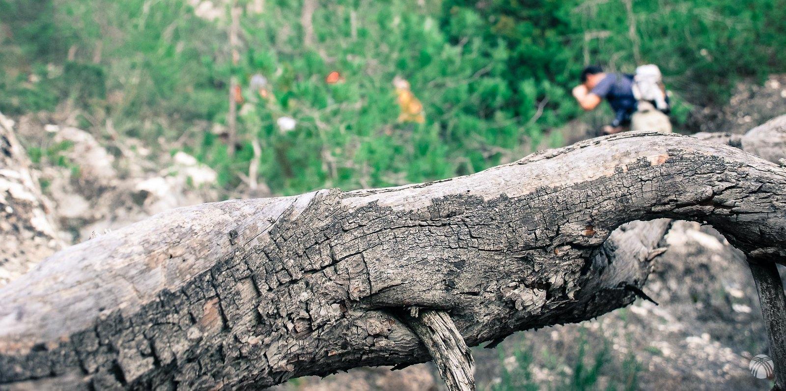 Viejos troncos