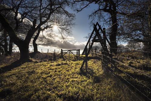 lochwood trees oak oaks ancient woodland