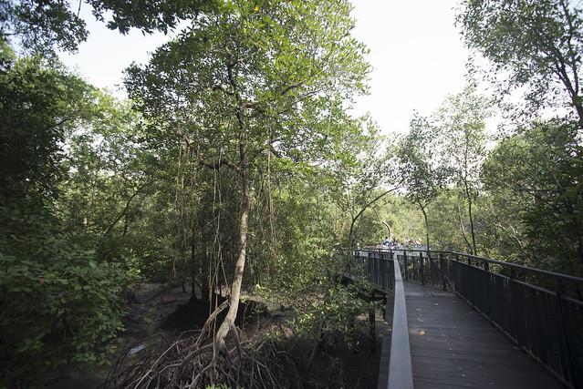 Sungei Buloh Wetland Reserve: Mangrove boardwalk