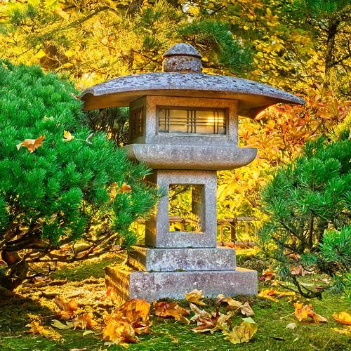 japanesegarden autumn fallseason jchoate colorful portlandoregon portlandjapanesegarden trees autumnleaves d610