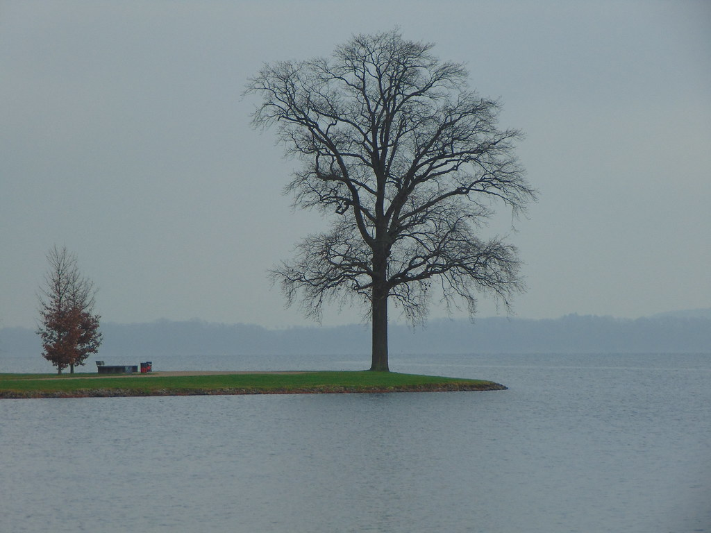 Due soli alberi