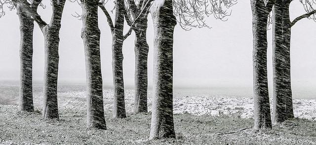 winter 2017 04