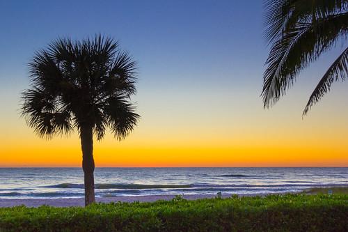 palm tree silhouette sunset orange sky gulf coast longboat key florida blue dark dusk tropical landscape schefflera arboricola